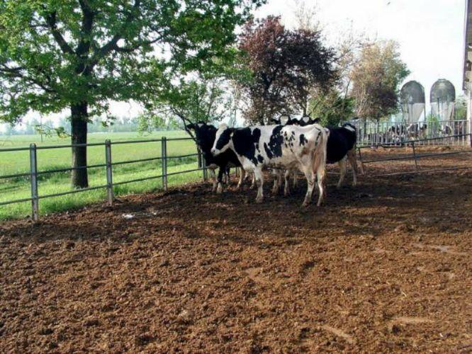 azienda-agricola-bonati